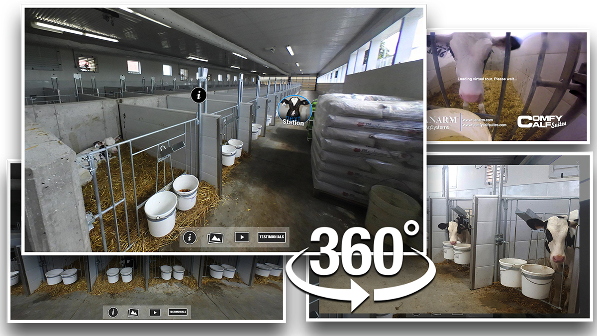 Self Guided Comfy Calf Suites Virtual Tour