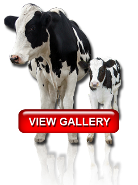 Dairy Image Gallery